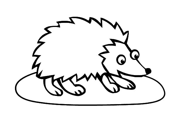 Hedgehog, : Big Eyed Hedgehog Coloring Pages