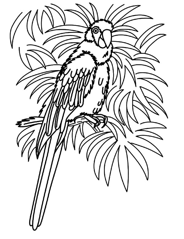 Hawaii, : Bird of Hawaii Coloring Pages