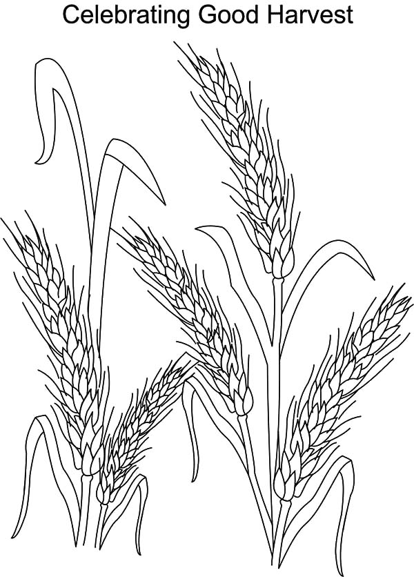 Harvests, : Celebrating Good Harvests Coloring Pages