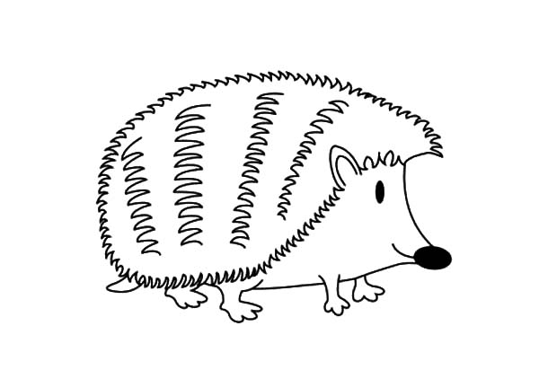 Hedgehog, : Cute Little Hedgehog Coloring Pages