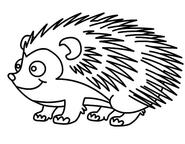 drawing hedgehog coloring pages