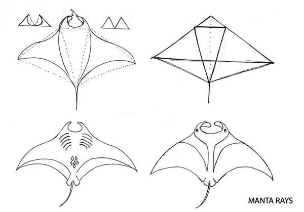Manta Ray, : Drawing Manta Ray Step by Step Coloring Pages