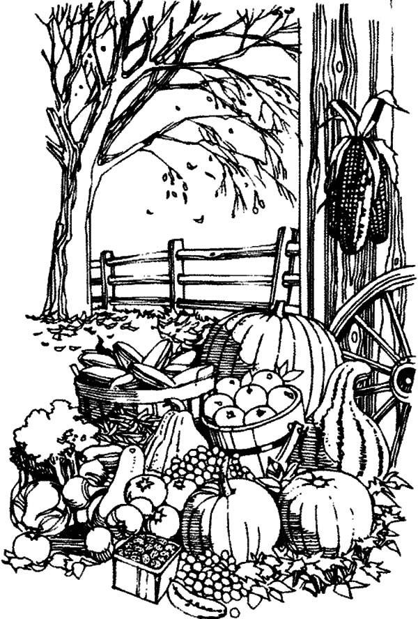 Harvests, : Fall Season Harvests Coloring Pages