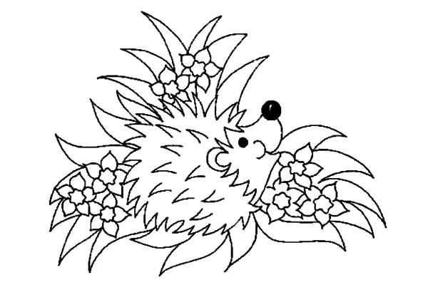 Hedgehog, : Floral Hedgehog Coloring Pages