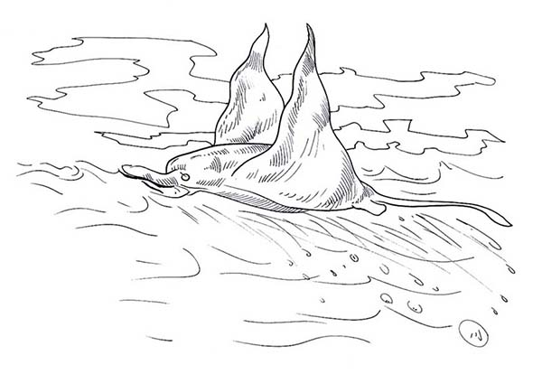 Manta Ray, : Great Swimmer Manta Ray Coloring Pages