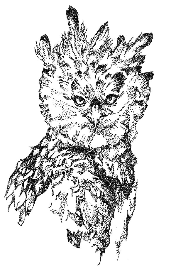 Harpy Eagle, : Harpy Eagle Coloring Pages