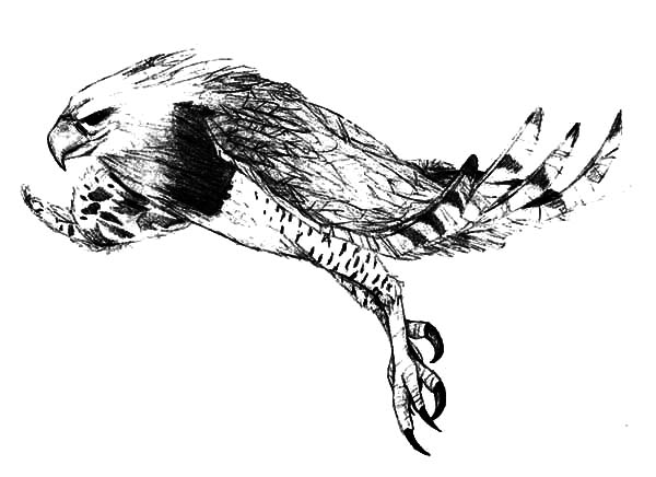 Harpy Eagle, : Harpy Eagle Hunt Its Prey Coloring Pages