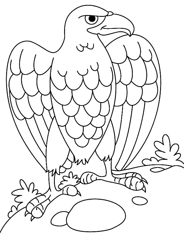 Harpy Eagle, : Harpy Eagle Lay Egg Coloring Pages