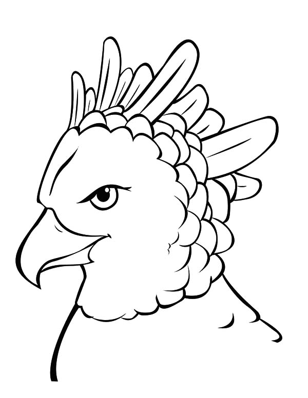 Harpy Eagle, : Harpy Eagle Most Powerful Bird Coloring Pages
