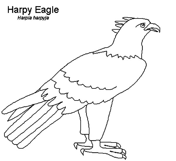 Harpy Eagle Outline Coloring Pages | Coloring Sun