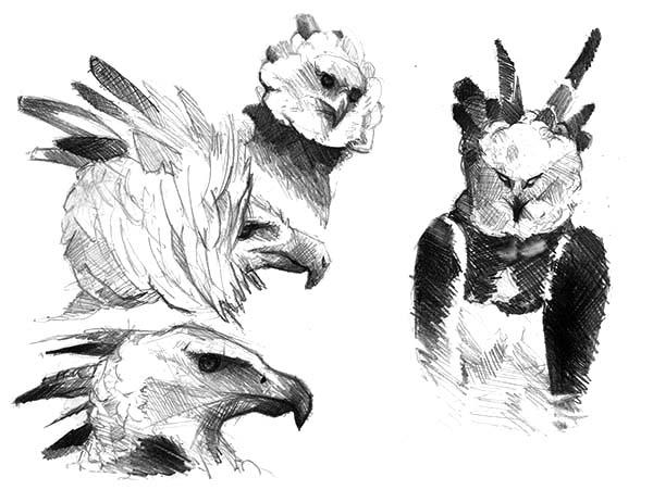 Harpy Eagle, : Harpy Eagle Pencil Sketch Coloring Pages