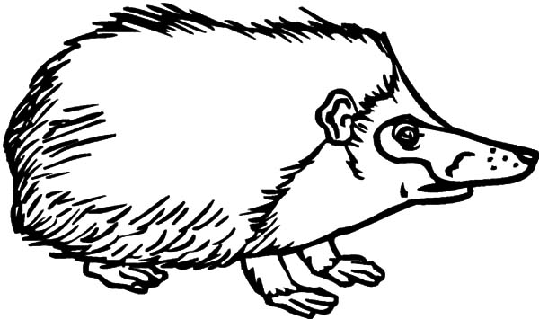 Hedgehog, : Hedgehog Dangerous Spines Coloring Pages