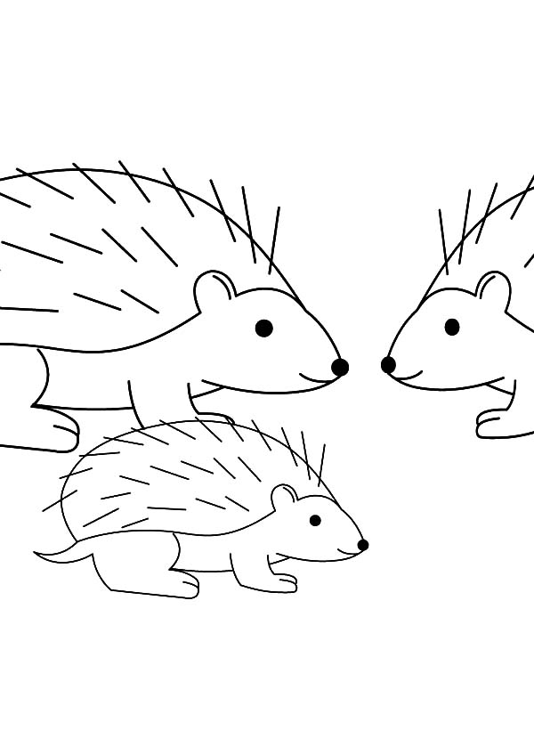 Hedgehog, : Hedgehog Happy Family Coloring Pages