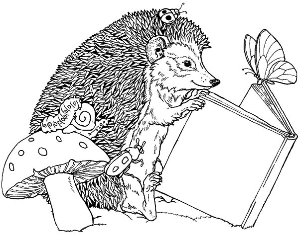 Hedgehog, : Hedgehog Read a Book with Butterfly Coloring Pages