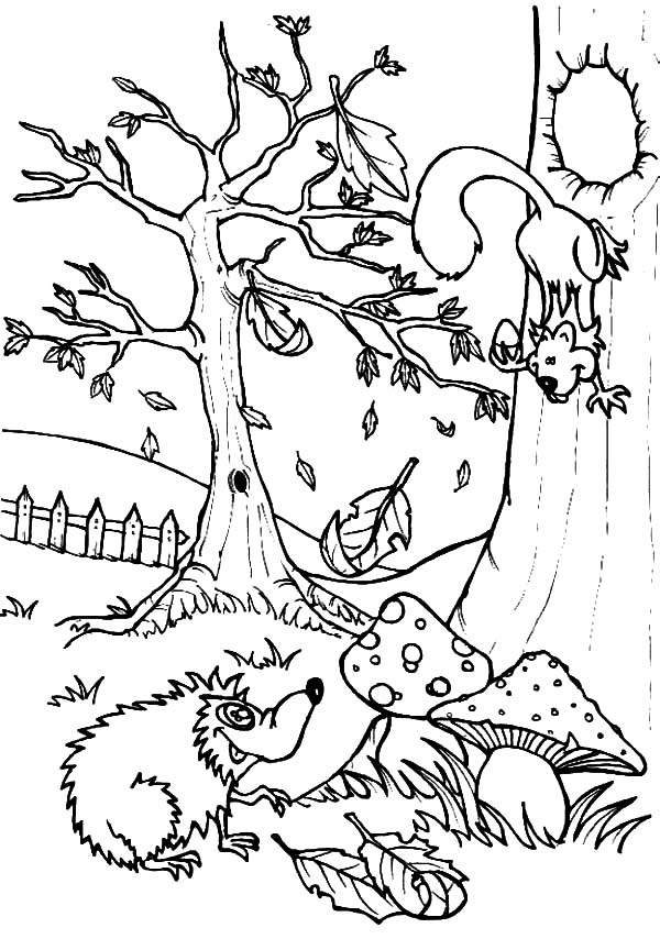Hedgehog, : Hedgehog Talking with Squirrel Coloring Pages