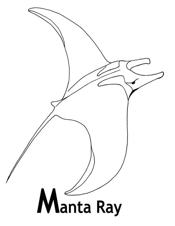 Manta Ray, : M is for Manta Ray Coloring Pages