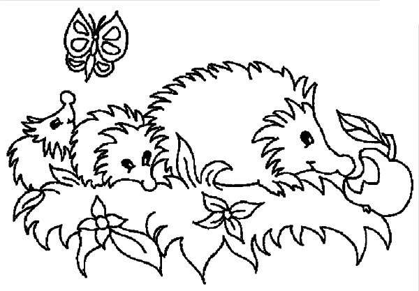 Hedgehog, : Mother Hedgehog Has Two Kids Coloring Pages