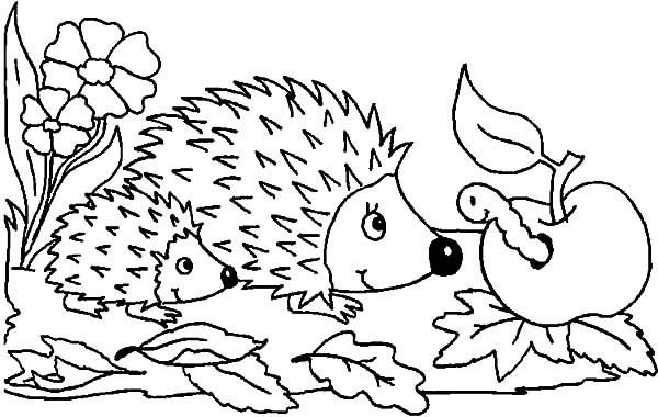 Hedgehog, : Mother and Baby Hedgehog Meet Caterpillar Apple Coloring Pages