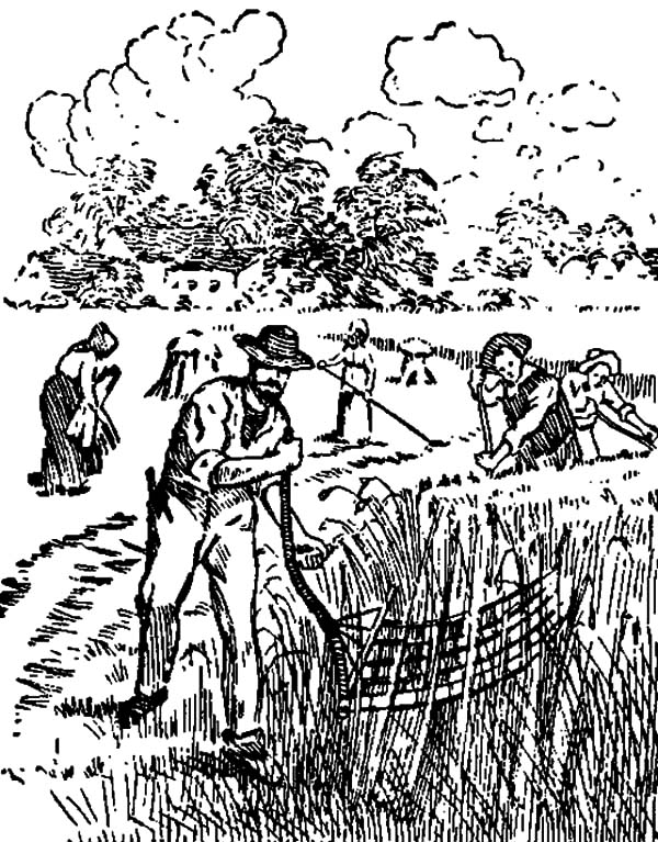 Harvests, : Old Fashioned Harvests Picture Coloring Pages