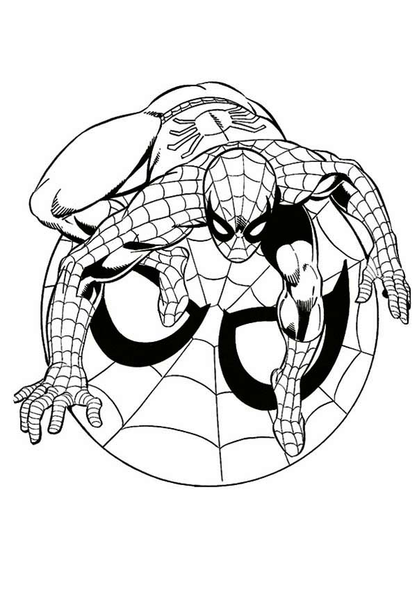 Spiderman, : Spiderman Coloring Page for Kids