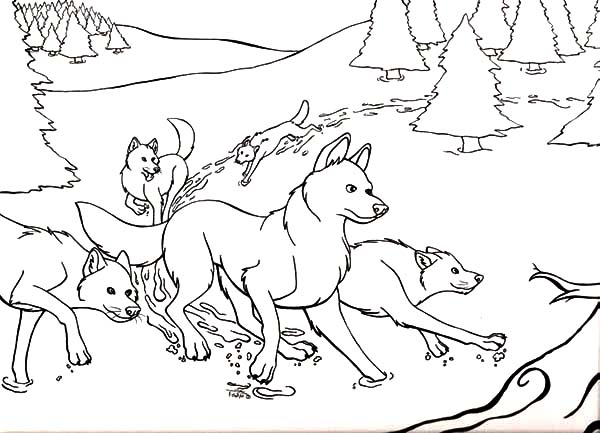 The Wild, : The Wild Hungry Wolves Coloring Pages