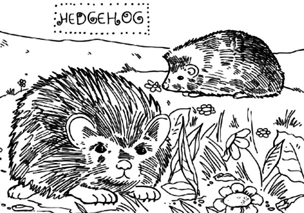 Hedgehog, : Two Little Hedgehog Playing in the Yard Coloring Pages
