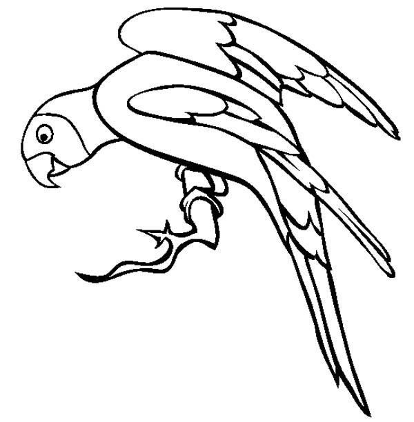 Parakeet, : Adorable Parakeet Coloring Page