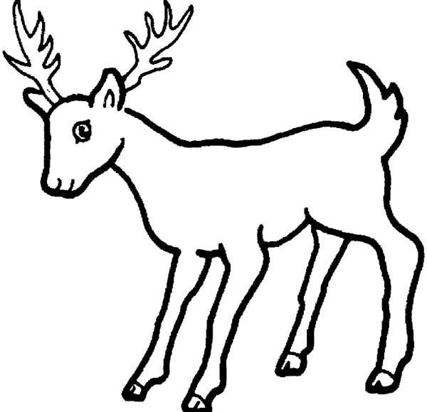 Deer, : African Deer Coloring Page