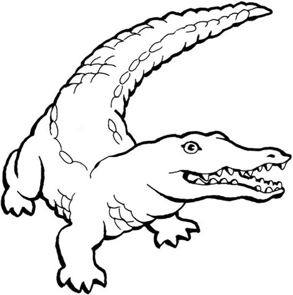 Crocodile, : Aggresive Animal Crocodile Coloring Page