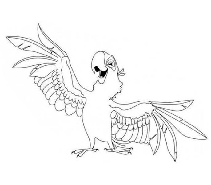 Parakeet, : Aladeen Parakeet Coloring Page