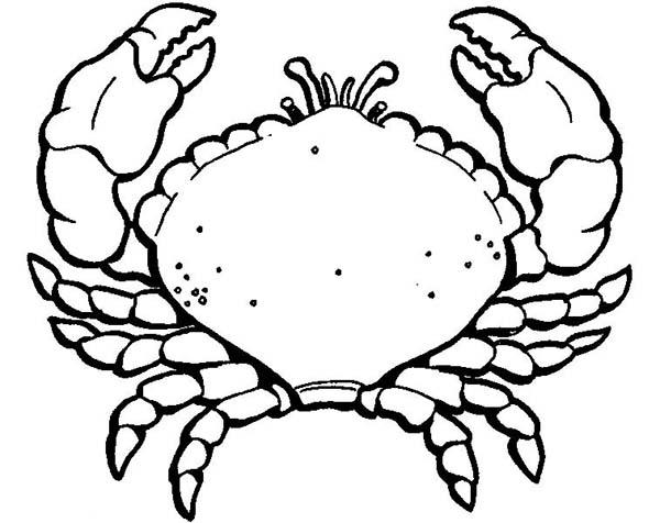 Crab, : Amazing Animal Crab Coloring Page