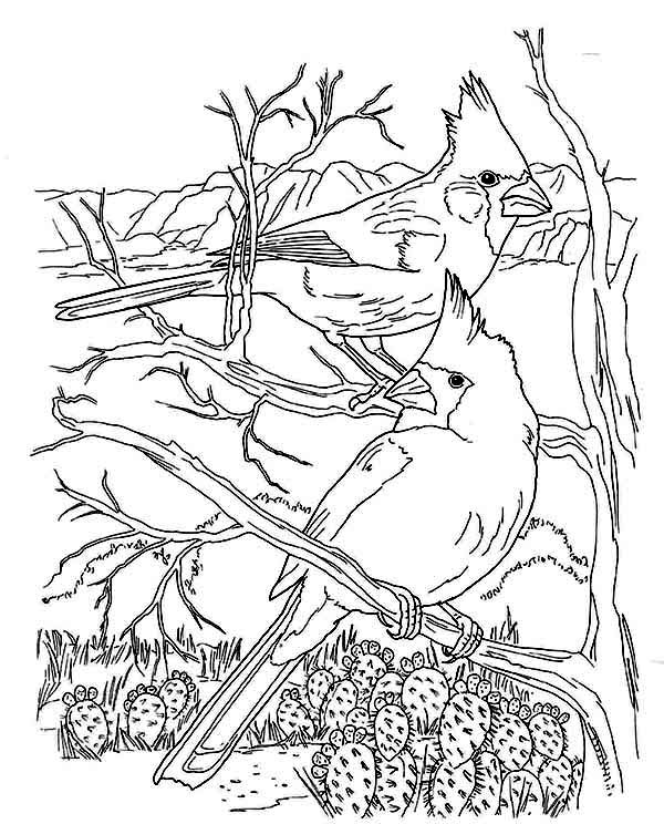 Cardinal Bird, : Awesome Animal Cardinal Bird Coloring Page