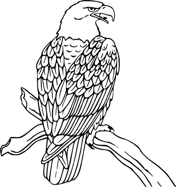 Eagle, : Awesome Bird Golden Eagle Coloring Page