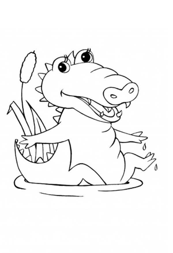 Crocodile, : Baby Born Crocodile Coloring Page
