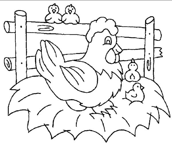 Chicken, : Baby Chicken Accompanying Their Mother Coloring Page