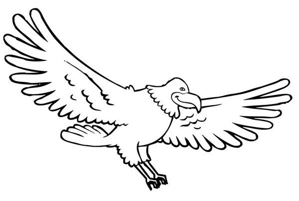 Eagle, : Bald Eagle Coloring Page