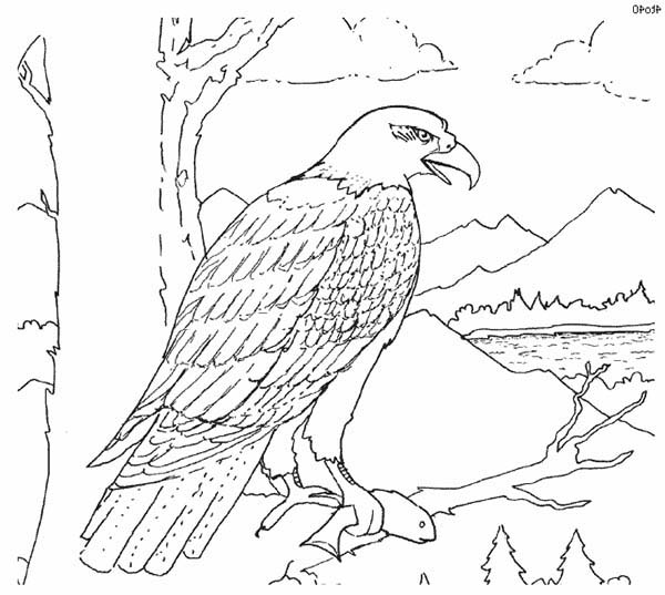 Eagle, : Bald Eagle Perch at Tree Branch Coloring Page