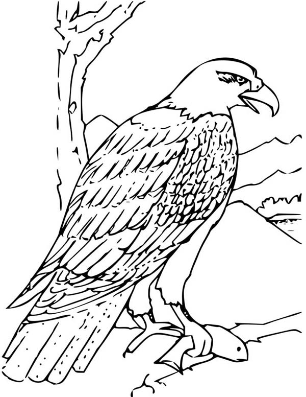 Eagle, : Bald Eagle Picture Catch Fish Coloring Page