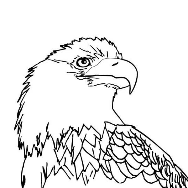Eagle, : Beautiful Picture of an Eagle Coloring Page