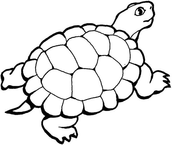 Turtle, : Beautiful Turtle Coloring Page