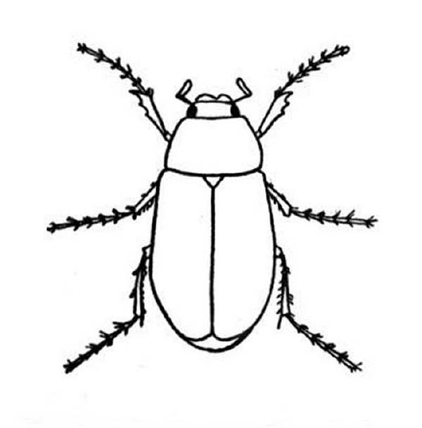 Bugs, : Beetle Bugs Coloring Page