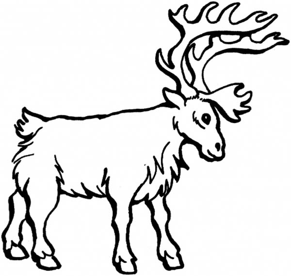Deer, : Big and Strong Reindeer Coloring Page