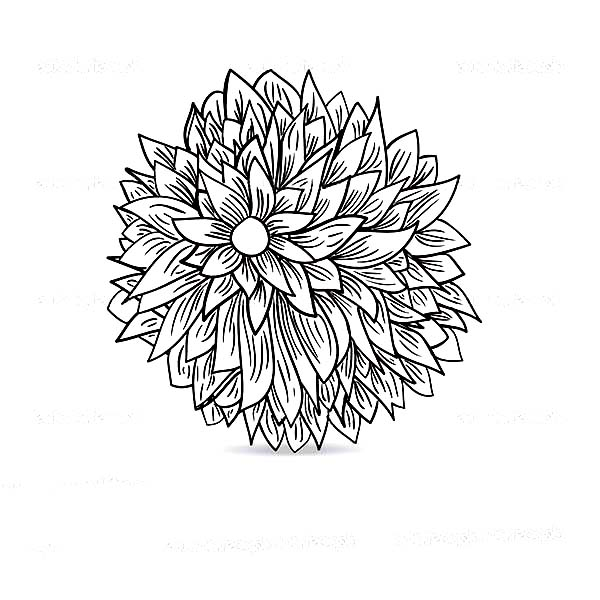 Chrysanthemum, : Blossom Chrysanthemum Coloring Page