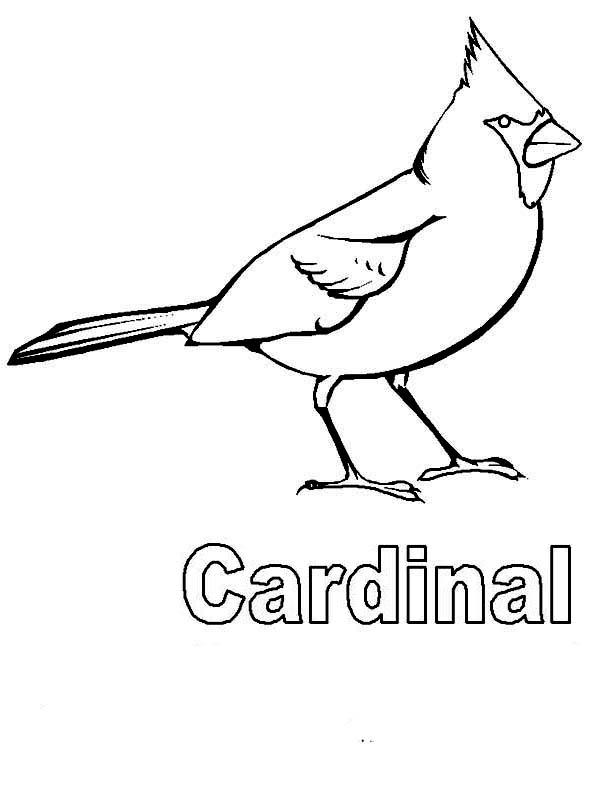 Cardinal Bird, : C is for Cardinal Bird Coloring Page