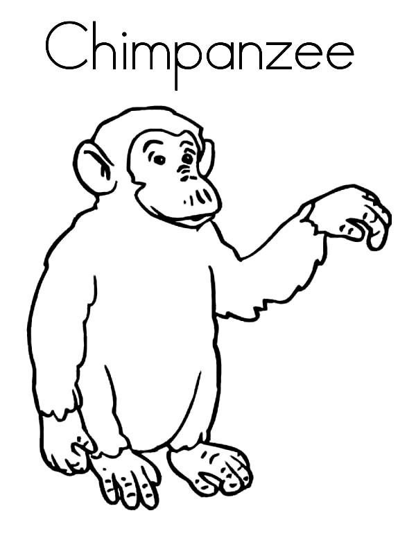 Chimpanzee, : C is for Chimpanzee Coloring Page