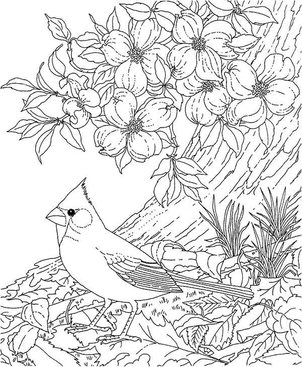 Cardinal Bird, : Cardinal Bird Between Beautiful Blooming Flowers Coloring Page