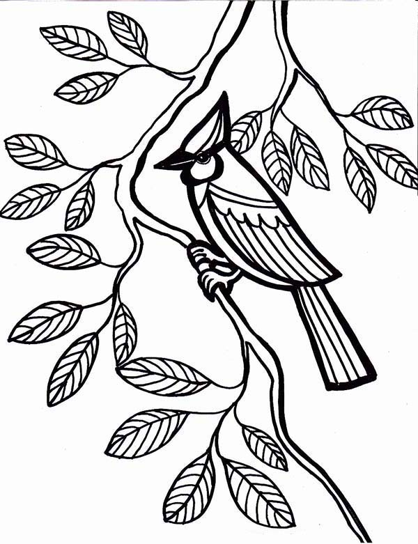 Cardinal Bird, : Cardinal Bird Come to Rest Under Tree Leaves Coloring Page
