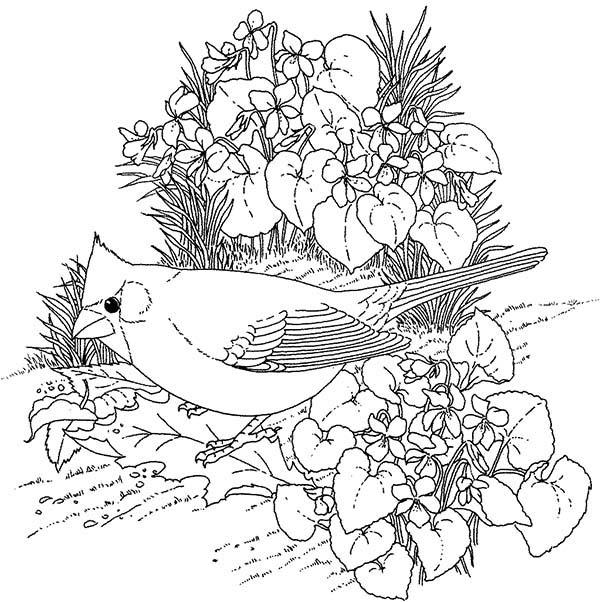 Cardinal Bird, : Cardinal Bird Find Food Coloring Page
