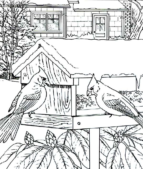 Cardinal Bird, : Cardinal Bird House Coloring Page