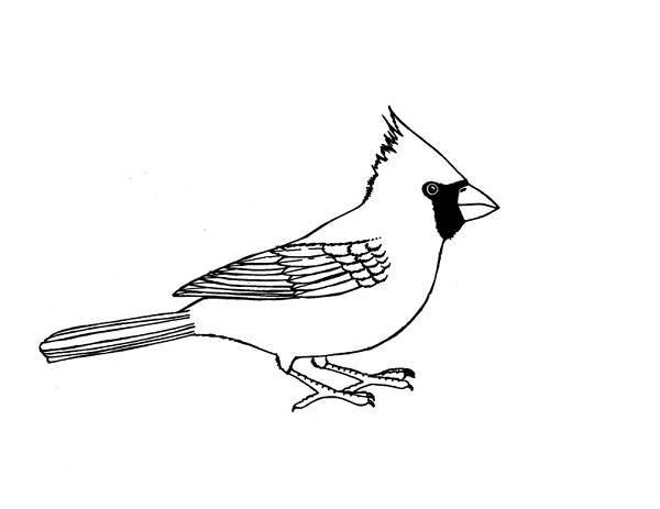 Cardinal Bird, : Cardinal Bird Image Coloring Page